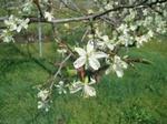 高野りんご園2.JPG